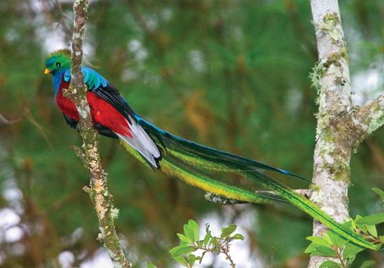 Quetzal (photo: Thor Janson)