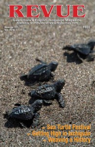 Hatchling Trek (photo: Jordan Banks)