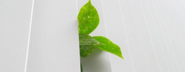 feuille verte dans mur blanc