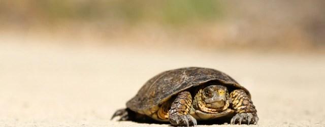 tortue sur du sable