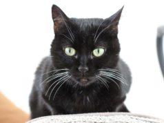 Blutzucker Messen Bei Der Katze Mit Anleitung Video
