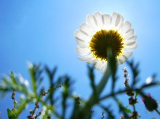 photography-tips-composition-2