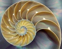 01nautilus-shell