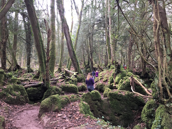 Exploring the Magical Woods of Puzzlewood