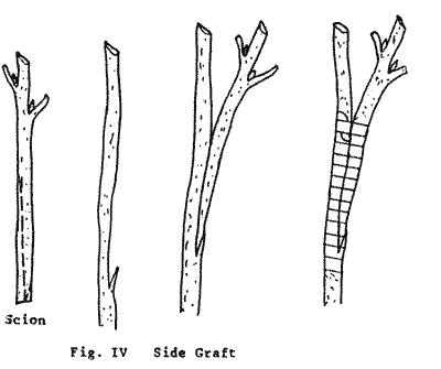 Diagram Of Gr, Diagram, Free Engine Image For User Manual