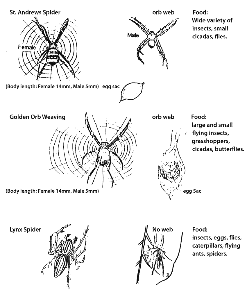 spider egg diagram nest site choice by the intertidal Spider Egg Diagram phoridae) development on spider egg