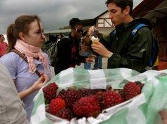Rasberries in Colonial Tovar Venezuela