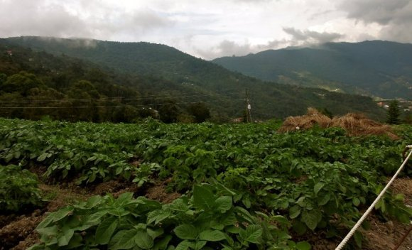 Colonial Tovar - agricultural focus on fruit