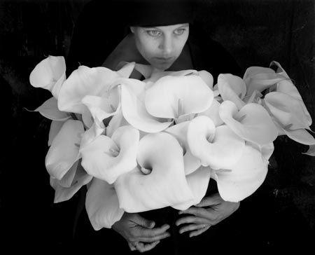 Calla Lilies © Kim Weston