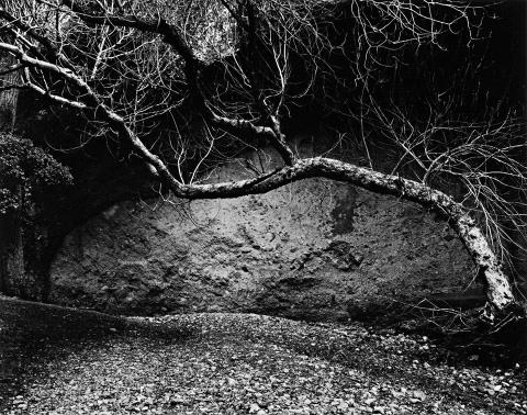 Edna Bullock, Tree and Wall, West Pinnacles, 1985. © 1985/2012 Bullock Family Photography LLC