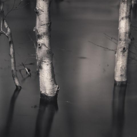 Carmel River Study © Roger Aguirre Smith