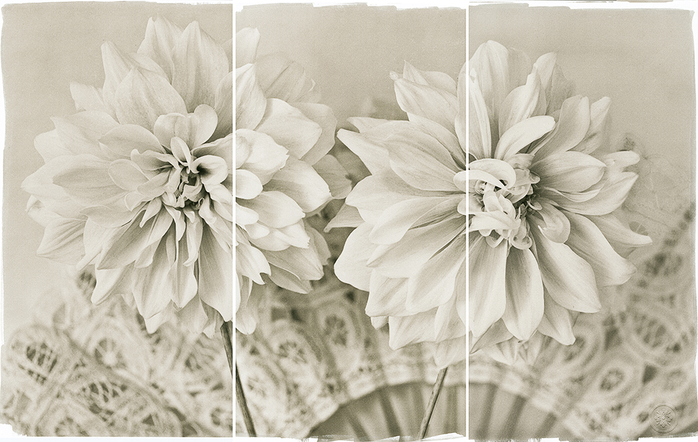 © Brigitte Carnochan