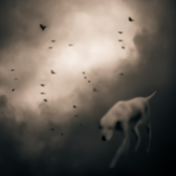 Bird Dog © Tami Bone