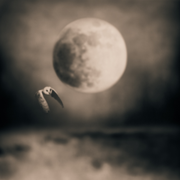 Merlin © Tami Bone