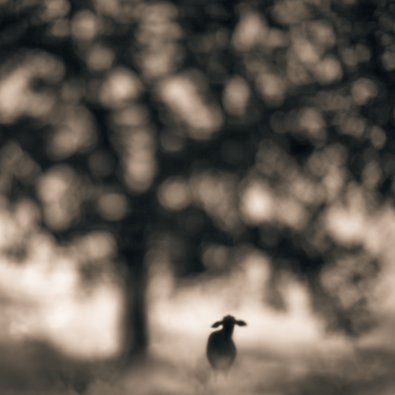 Rancho © Tami Bone