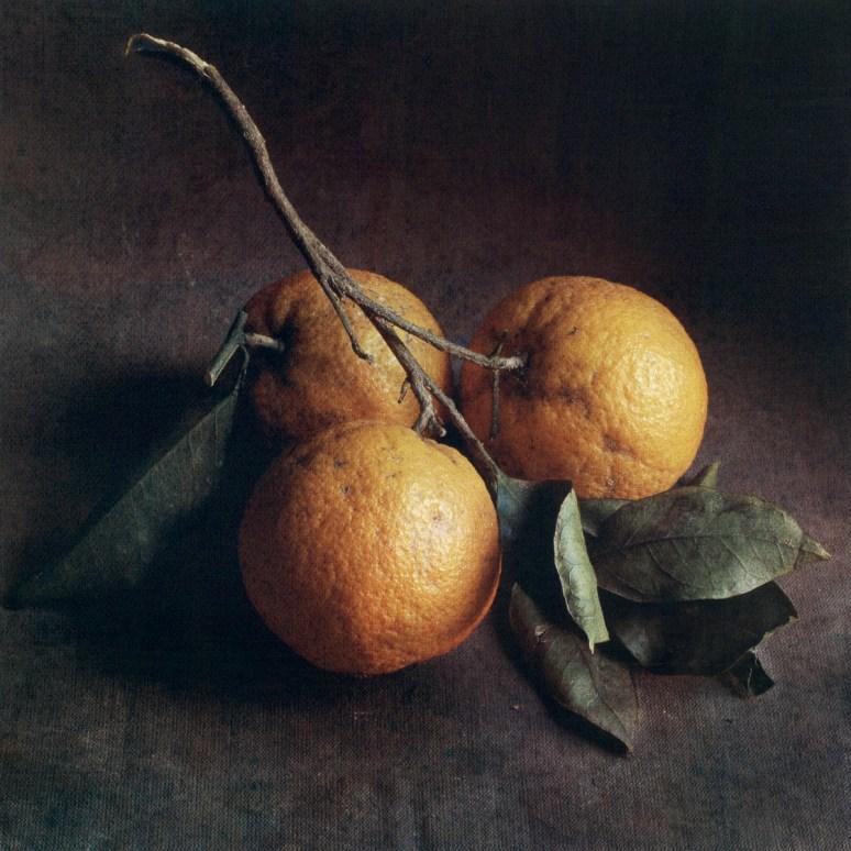 Autumn Oranges by Cy DeCosse