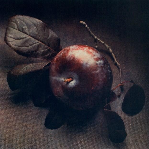 Autumn Plum © Cy DeCosse,3-Color gum dichromate print