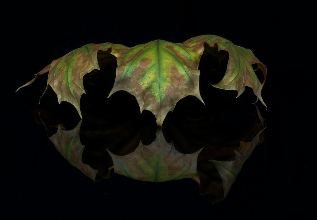 Leaf 5 © Terri Cappucci