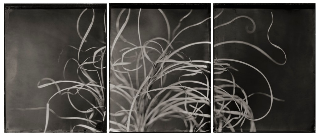 Portrait of Grass © Michelle Smith-Lewis