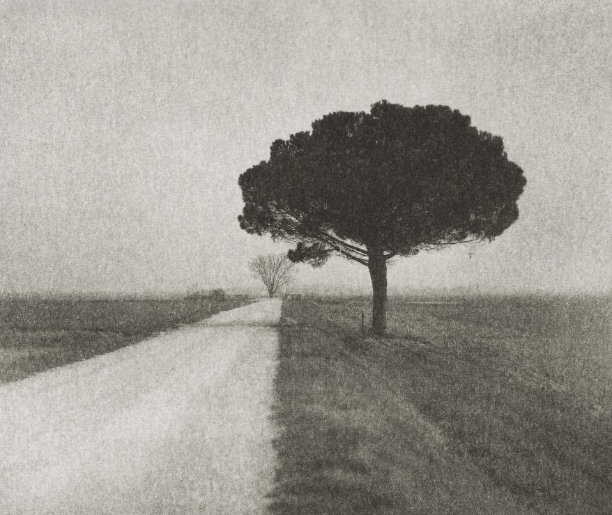 Pine on Gravel Road Domenico Foschi