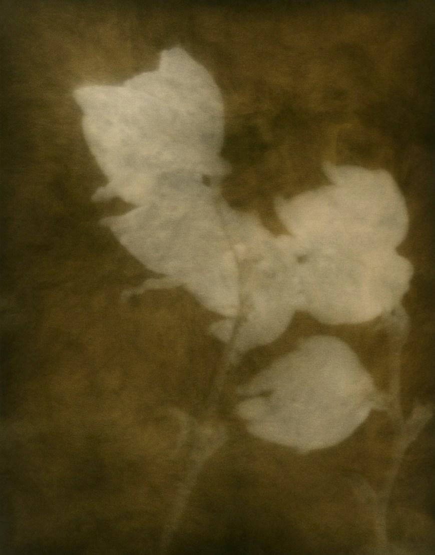 Untitled 4 © Zia Ayub