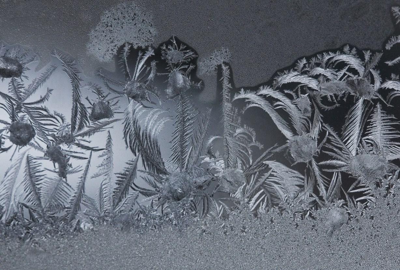 Snow Flowers© Cy DeCosse