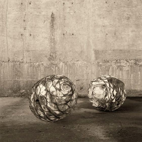 Hembra y Macho © Joel Salcido