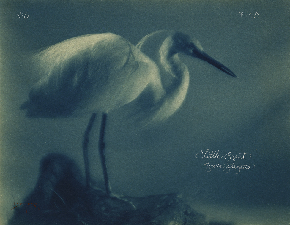 Little Egret © Laszlo Layton