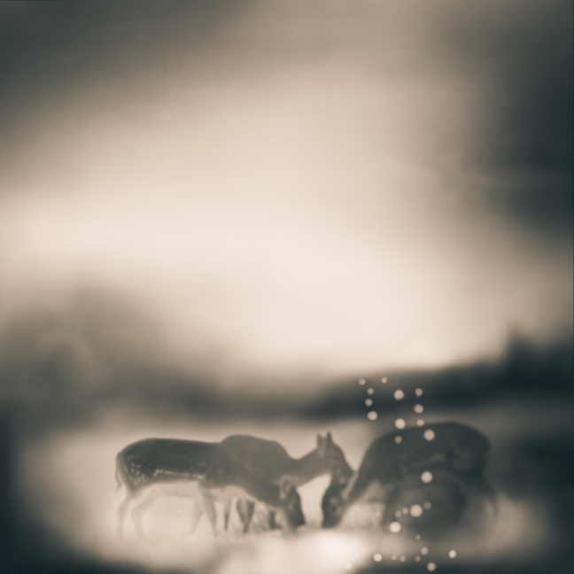Fauna © Tami Bone