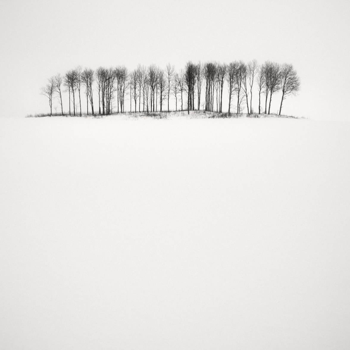 Birches In Snow,2013, © Frang Dushaj