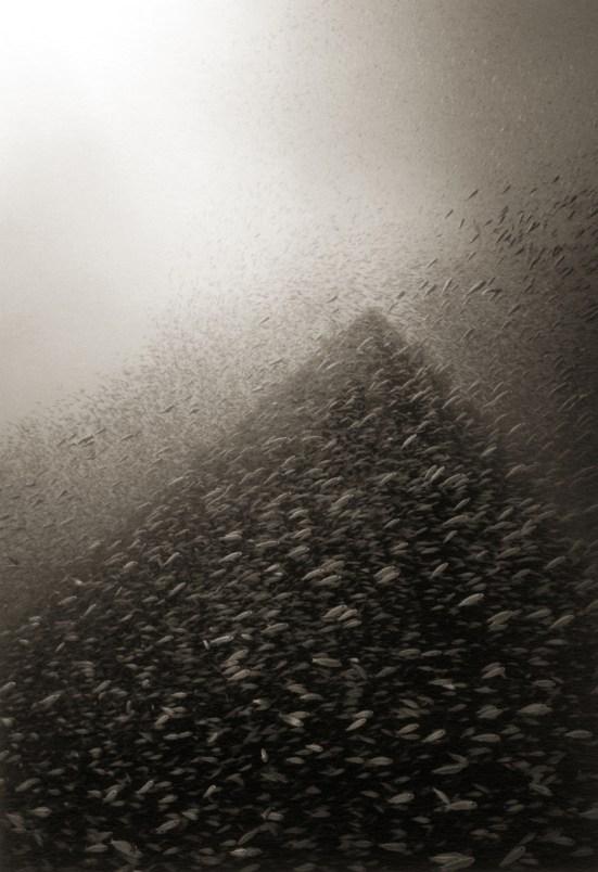 Shipwreck and Baitfish I © Robin Robinson
