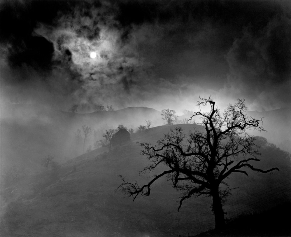 Stark Tree, 1956 Wynn Bullock © Bullock Family Photography, LLC
