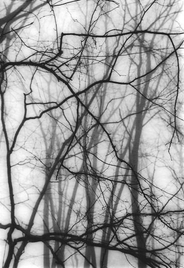 Still 541 © Patricia Bender