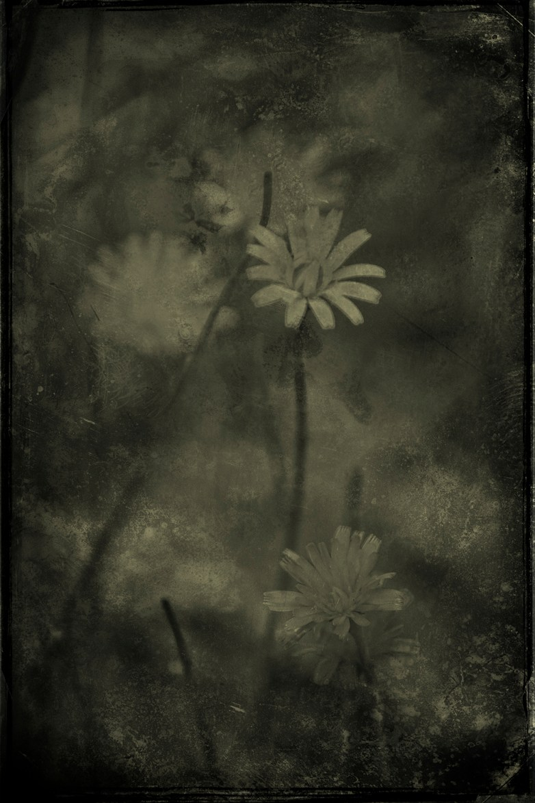 Contemplation .13 © Eduardo Fujii