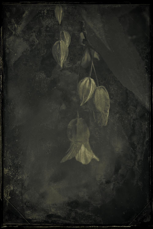 Contemplation 2 © Eduardo Fujii