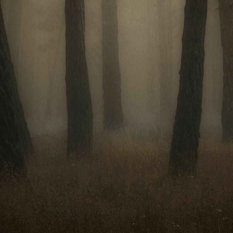 Into the Woods 8 © Eduardo Fujii