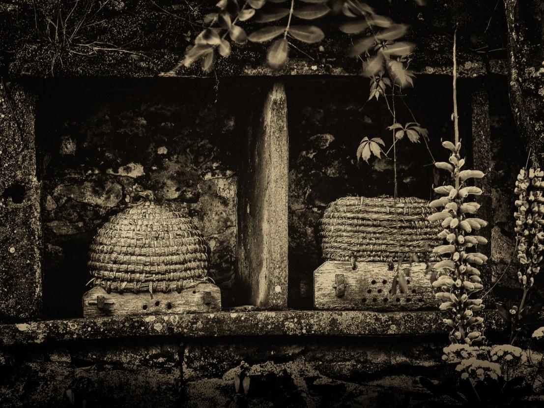Bee Skeps ©Apple Tree © Barbara Moon Batista
