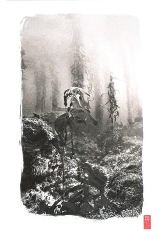 Kelp Forest © Ryuijie