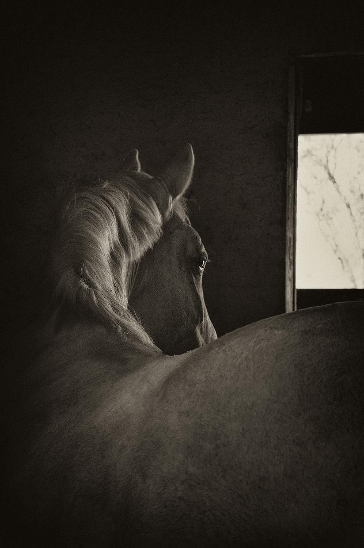 Barn Light #2 © Mary Aiu