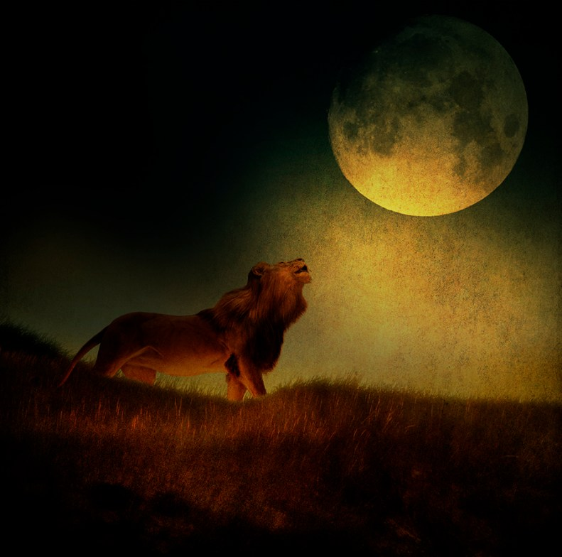 Moon Lion © Fran Forman