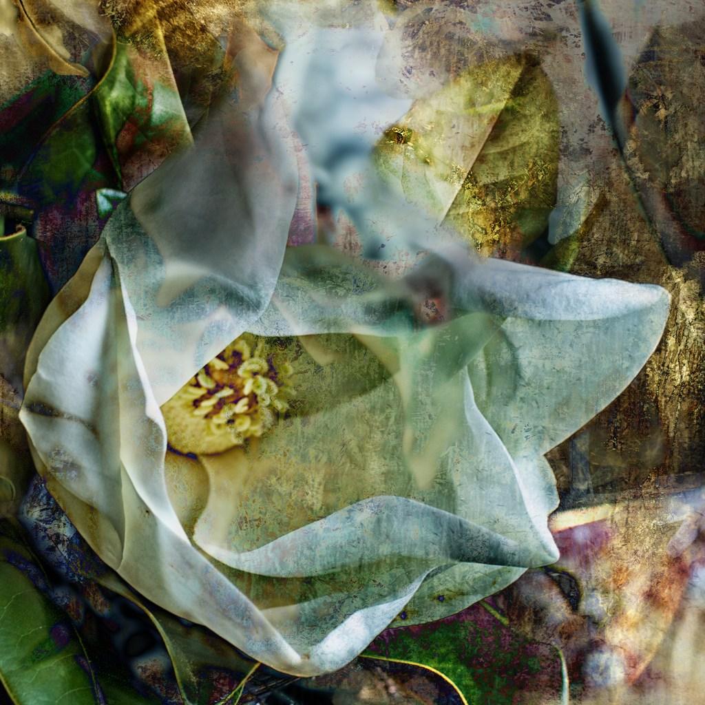 Flower Undone ©C.Rosenthal and J.Rosenthal
