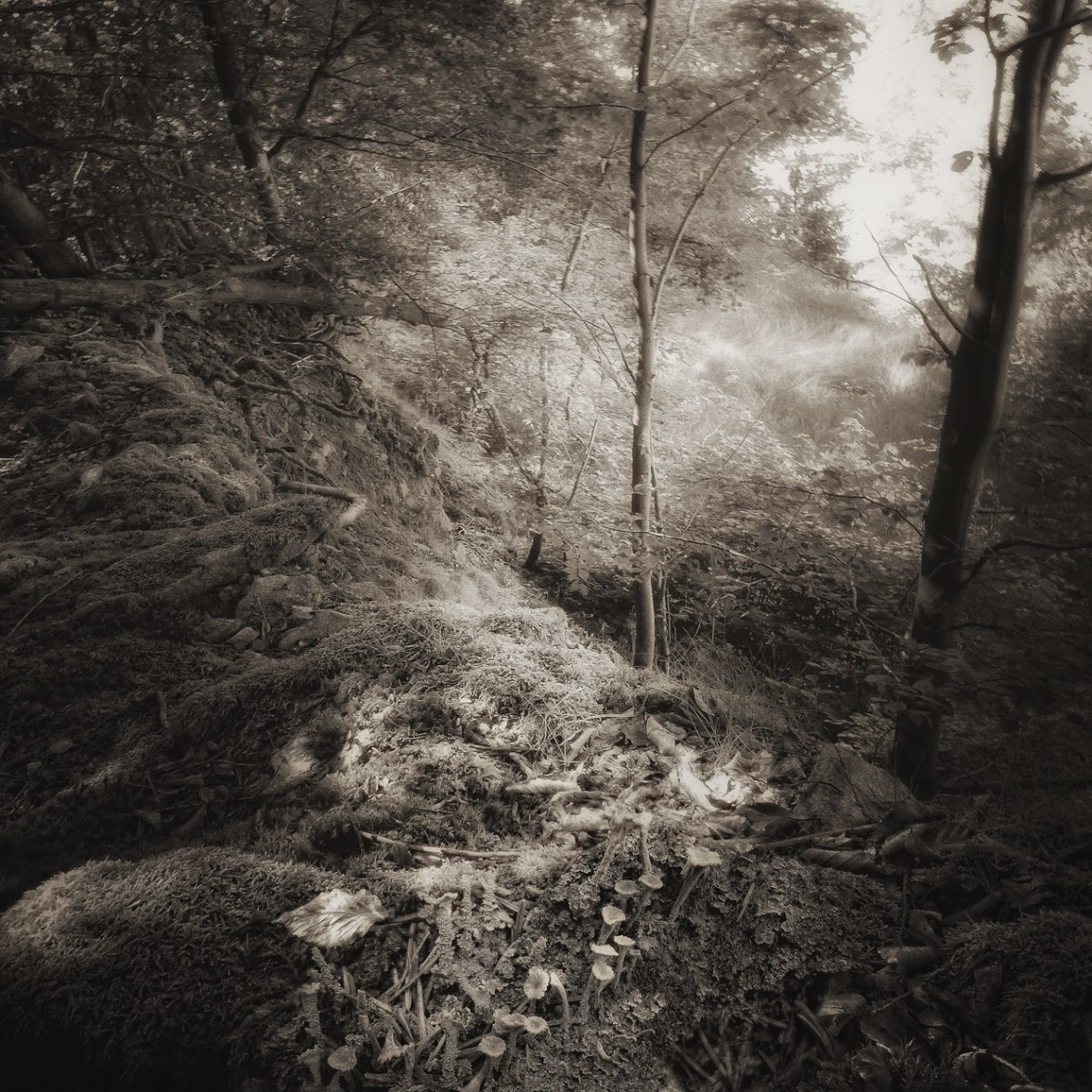 Monochrome 280 © Bernd Webler