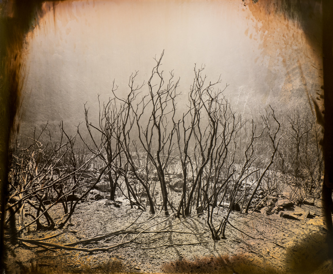 Burning Bush, 2018 © Luther Gerlach