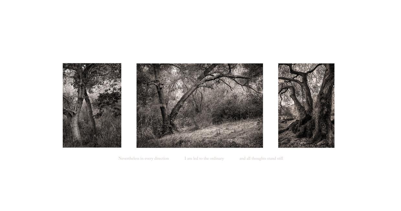 Seeing Silence 6 © Jodie Hulden