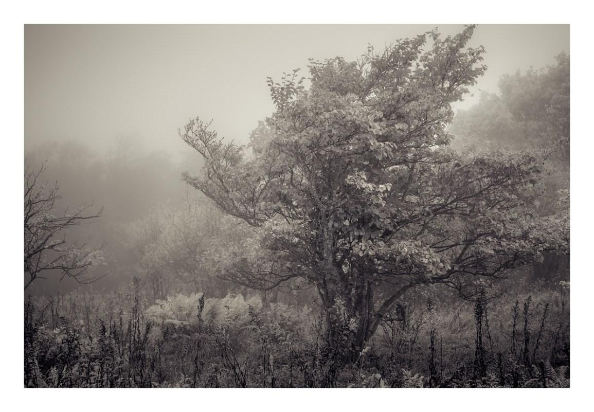 Witch Hazel,2018 © Mark Muse