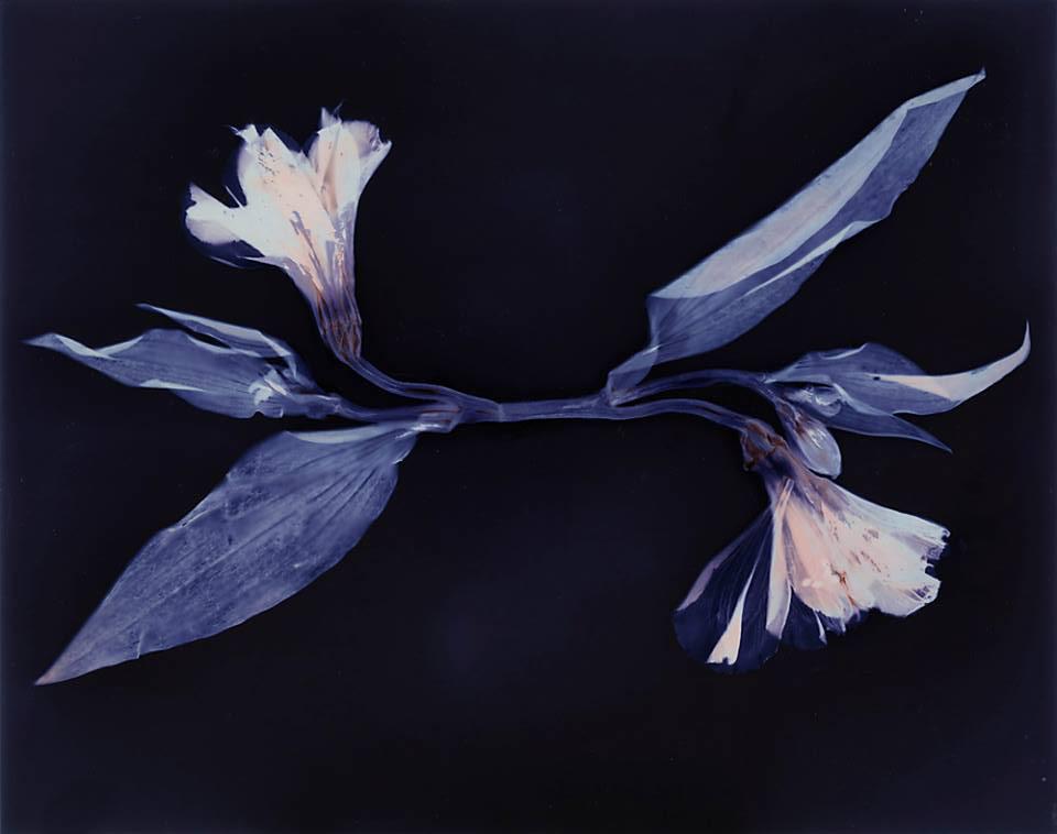 Flower, Lumen © Denis Roussel