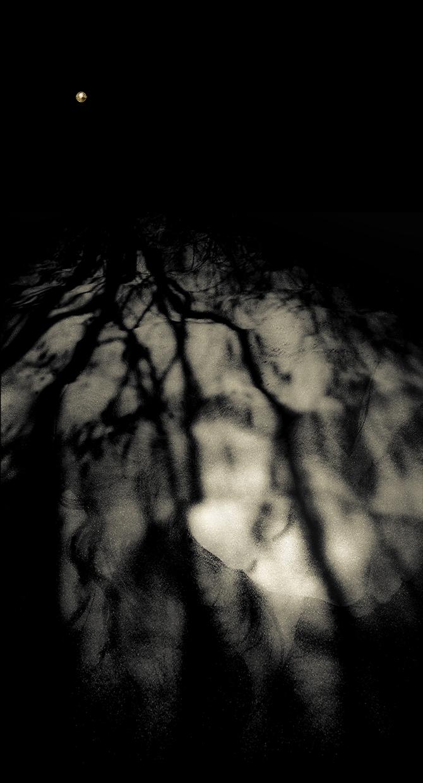 Dreaming My Dreams© Nicola Hackl-Haslinger