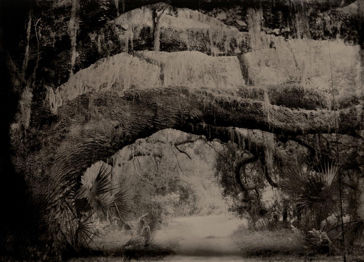 Cumberland Island © Susan Bryant