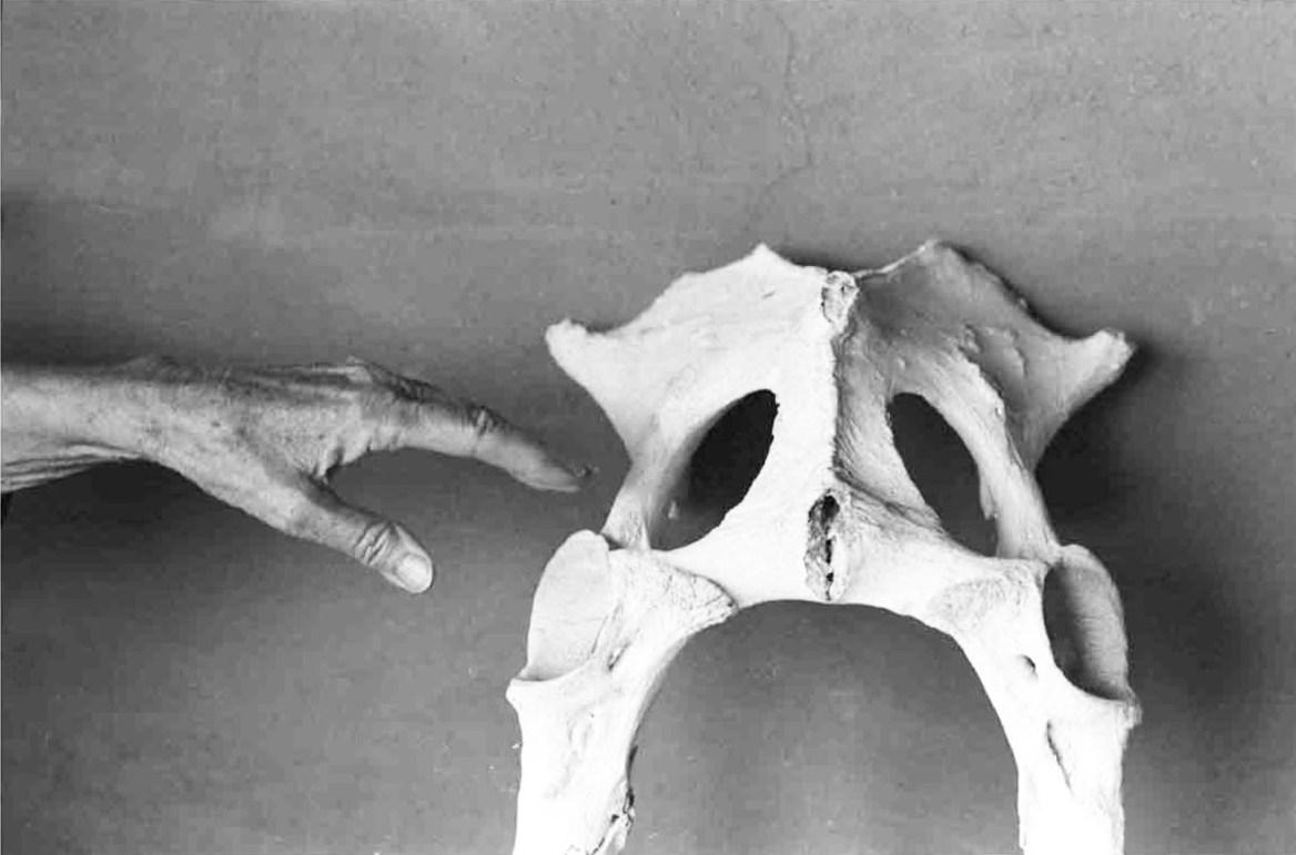 O'Keefe and Pelvis,1966 © John Loengard