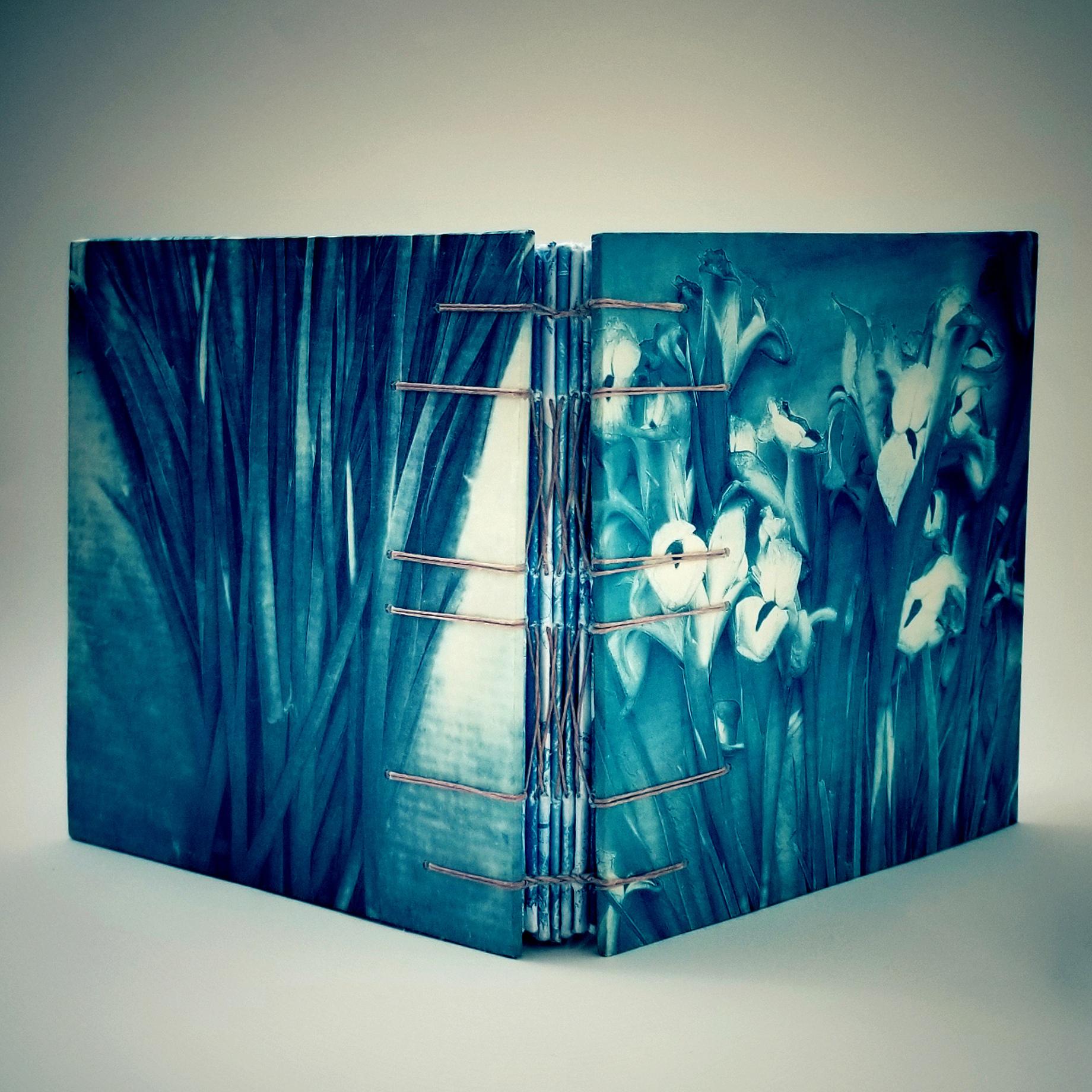 Siberian Iris, French Link Book © Diana Bloomfield